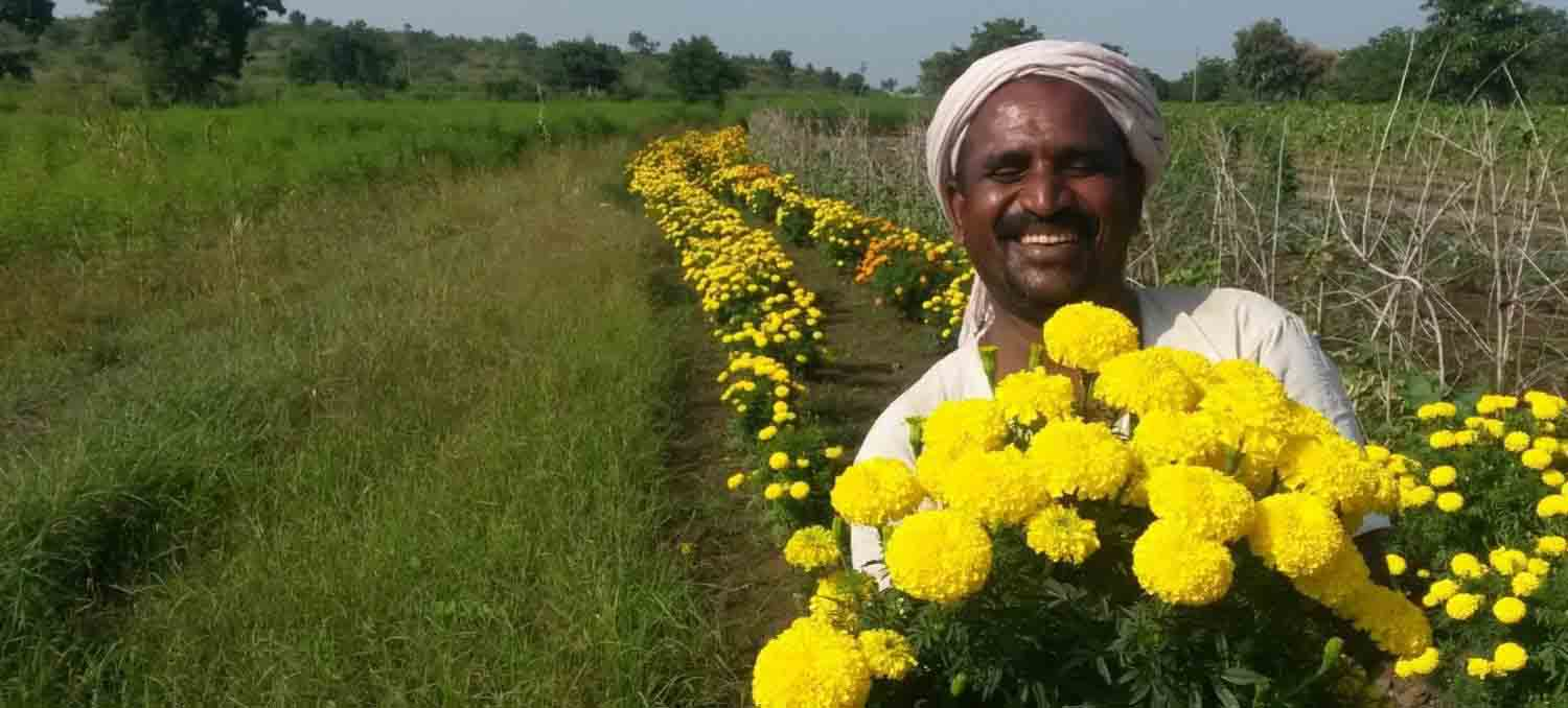 East-West Seed India